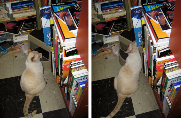 cat at the bookstore