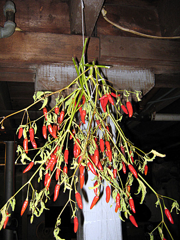 hanging peppers